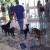 Adoção de animais 2