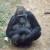Filhote de gorila na FZB-BH - Foto Suziane Fonseca 05.08.2014  (24)